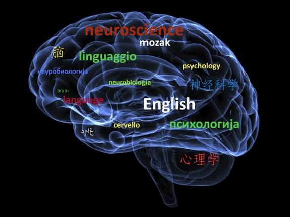 Yabancı Dil Öğrenmek Beyin Yapısını Nasıl Değiştiriyor? - Bilimoloji