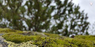Karayolları ile kaplı kayanın perspektifinden ağaçlara ve gökyüzüne bakmak